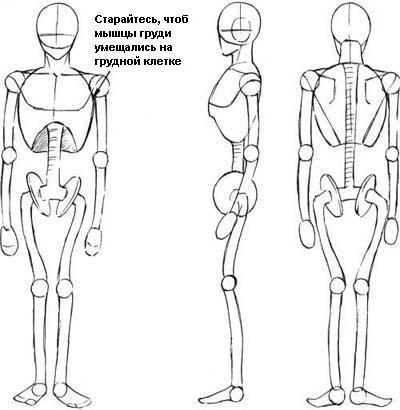 на скелет человека и