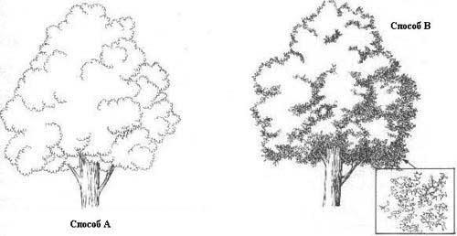 в изображении деревьев,