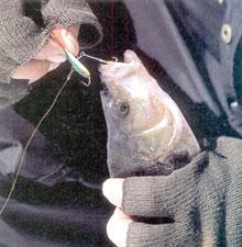 Нежная рыбалка с балансиром
