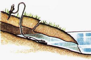 ловля ондатры петлями