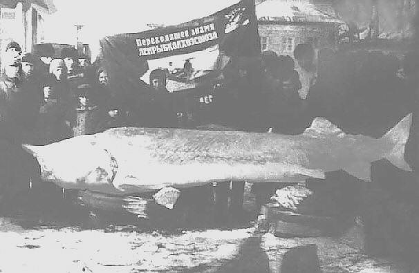 Царь-рыба Редкая фотография Царь-рыбы
