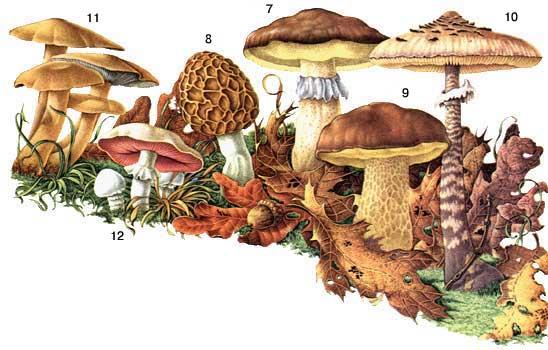 Обычные съедобные грибы.